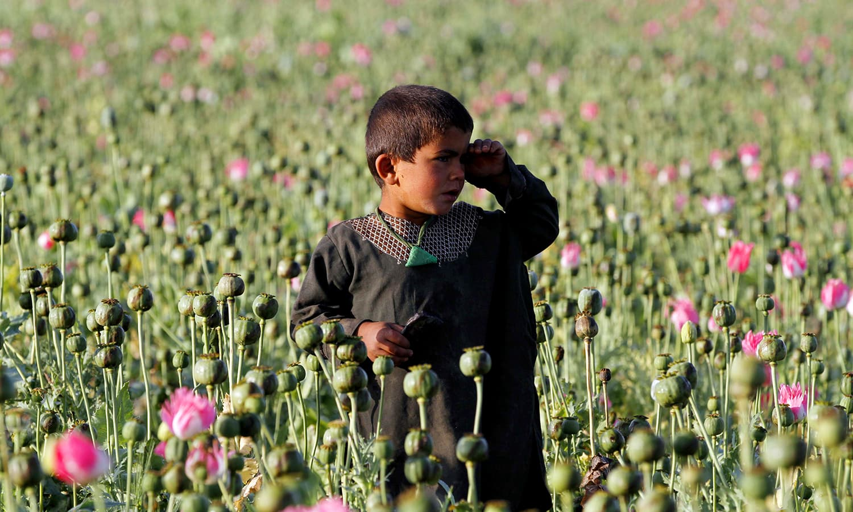 افغانستان میں بچے بھی ہیروئن کی لت میں مبتلا