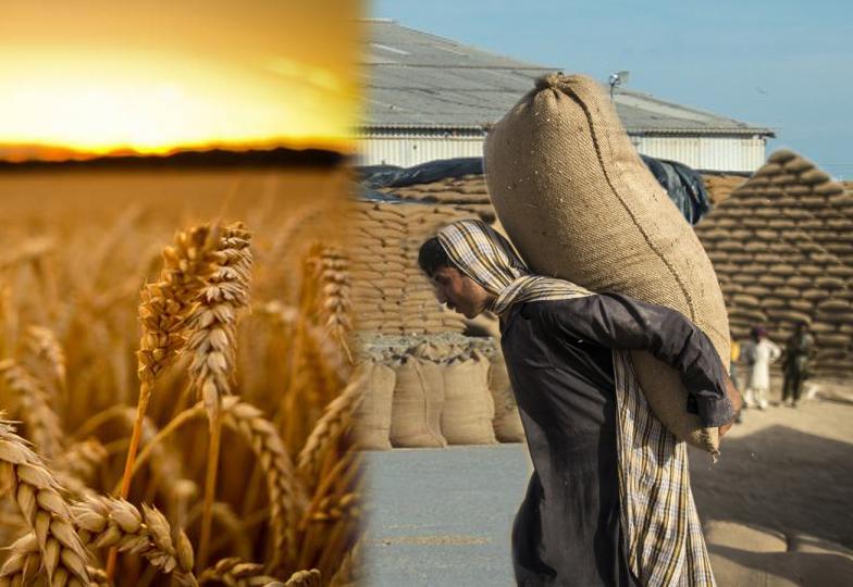 سنتا جا شرماتا جا؛ محکمہ خوراک کے 70 افسران ڈھائی ارب کی گندم ڈکار گئے