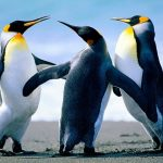 نیوزی لینڈ میں دنیا کے سب سے بڑے پرندے کی دریافت