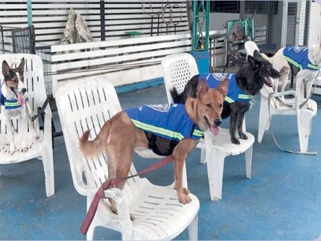 اسمارٹ جیکٹ سے لیس آوارہ کتے چوکیدار بن گئے