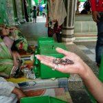 بھارت میں بچھو والی درگاہ کا معجزہ،زائرین کاتانتابندھ گیا
