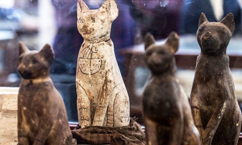 مصر میں بلیوں، شیروں، مگر مچھوں اور سانپوں کی حنوط شدہ لاشیں دریافت