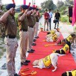 بھارت میں سات کتے اعلیٰ فوجی اعزاز کے ساتھ ریٹائرڈ