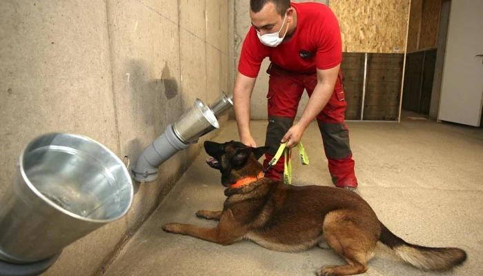 فرانس میں کتوں کے ذریعے کورونا ٹیسٹنگ کا تجربہ،سونگھ کر نشاندہی کریں گے