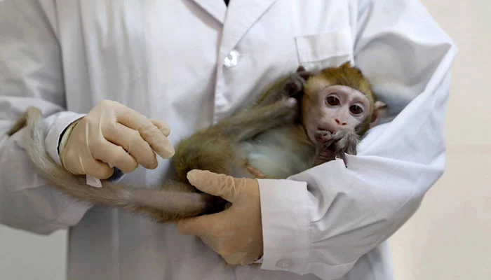کورونا ویکسین کے بندروں پر تجربے کے حوصلہ افزا نتائج سامنے آگئے