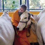 بھارت میں گائے ذبح کرنے پر دس سال قید،پانچ لاکھ جرمانہ،قانون منظور