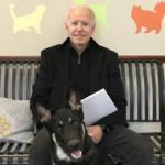 جوبائیڈن کی آمد کے ساتھ ہی وائٹ ہاوس میں کتوں کی واپسی