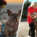 لیڈی گاگا کے مغوی کتوں کی باحفاظت واپسی
