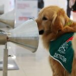کتے ایک سیکنڈ میں کووڈ 19 کے مریض کی شناخت کرسکتے ہیں،تازہ تحقیق