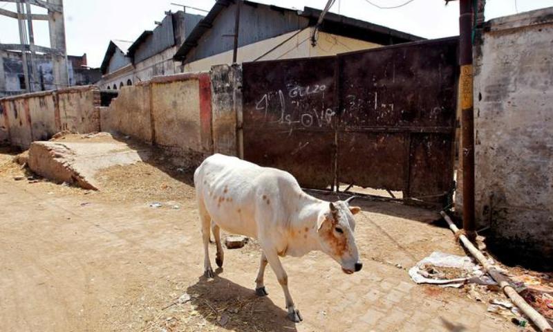 راجستھان میں گائے کی اسمگلنگ کے شبے میں ہجوم کا حملہ