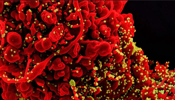 معاشی سرگرمیوں کی بحالی میں بھارتی وائرس ڈیلٹاخطرہ قرار